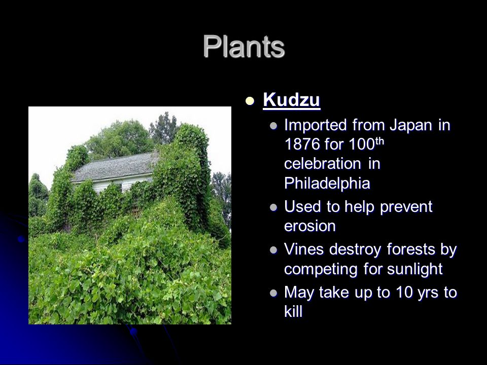 Plants Kudzu. Imported from Japan in 1876 for 100th celebration in Philadelphia. Used to help prevent erosion.