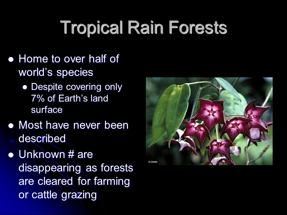 Tropical Rain Forests Home to over half of world's species