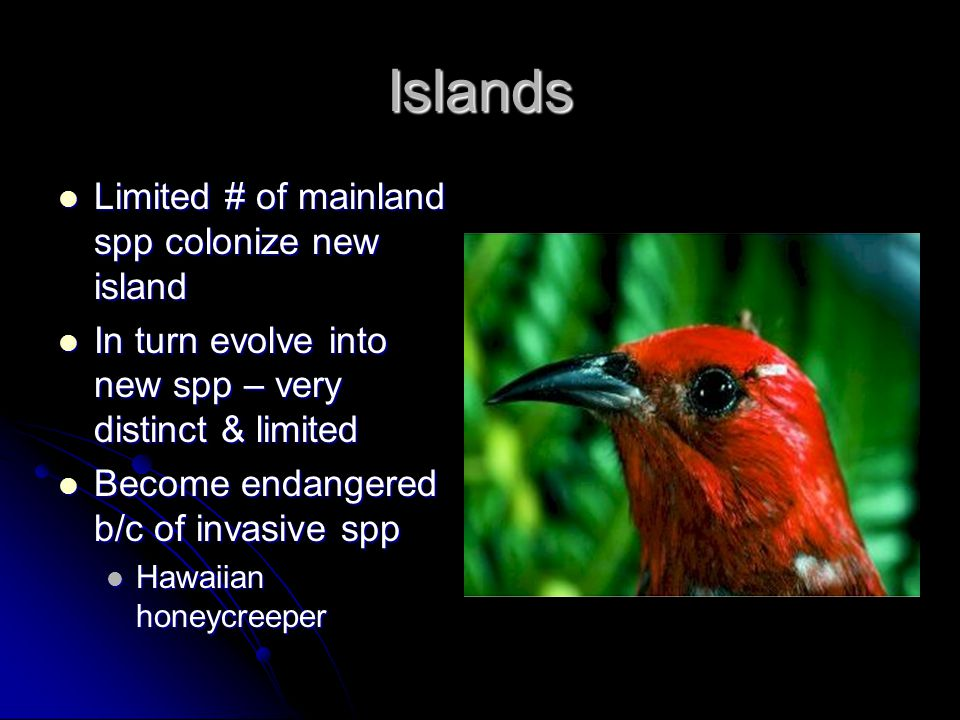 Islands Limited # of mainland spp colonize new island
