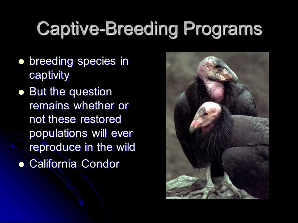 Captive-Breeding Programs