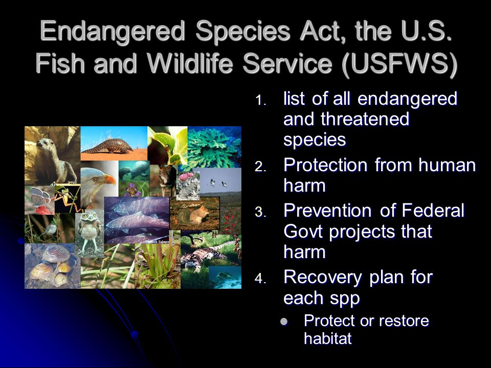 Endangered Species Act, the U.S. Fish and Wildlife Service (USFWS)