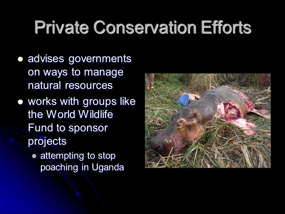 Private Conservation Efforts