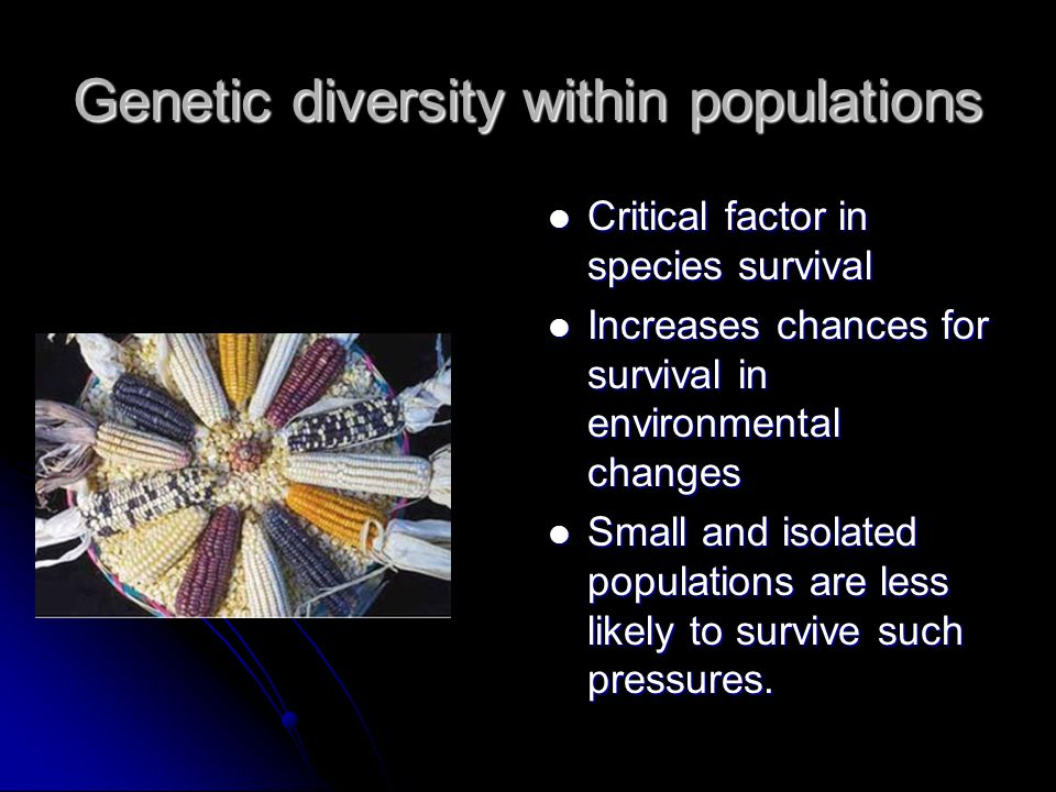 Genetic diversity within populations