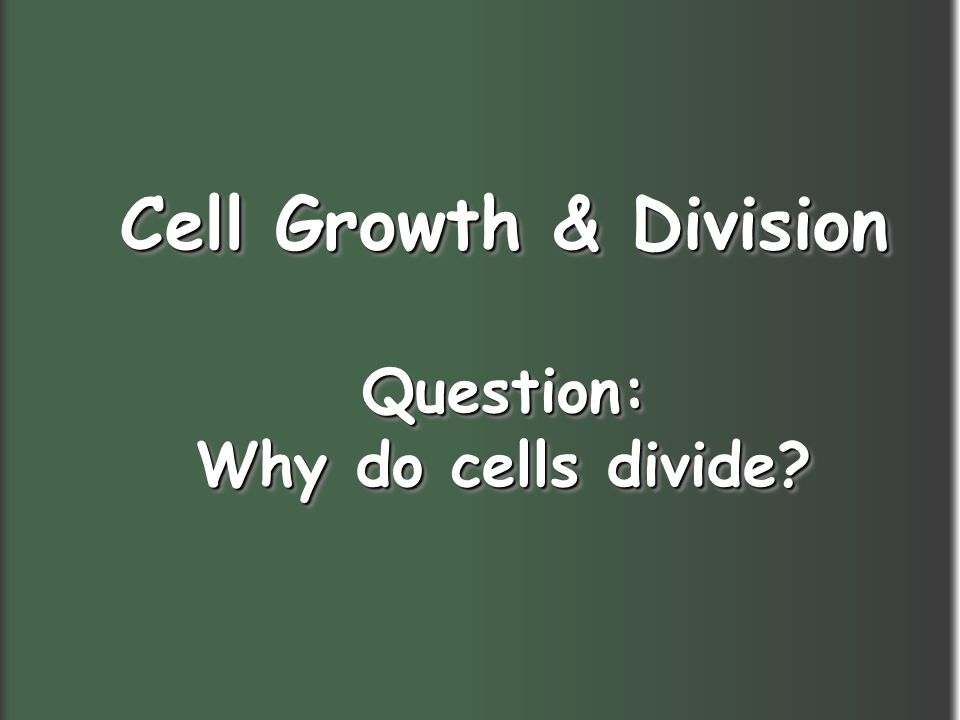 Cell Growth & Division Question: Why do cells divide