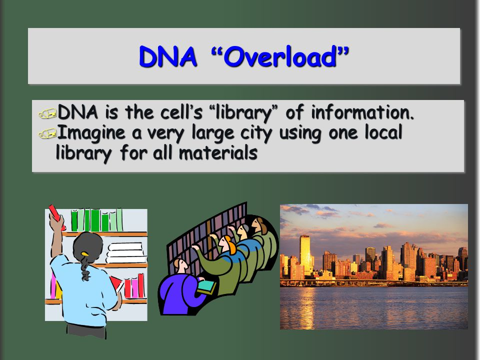 DNA Overload DNA is the cell's library of information.