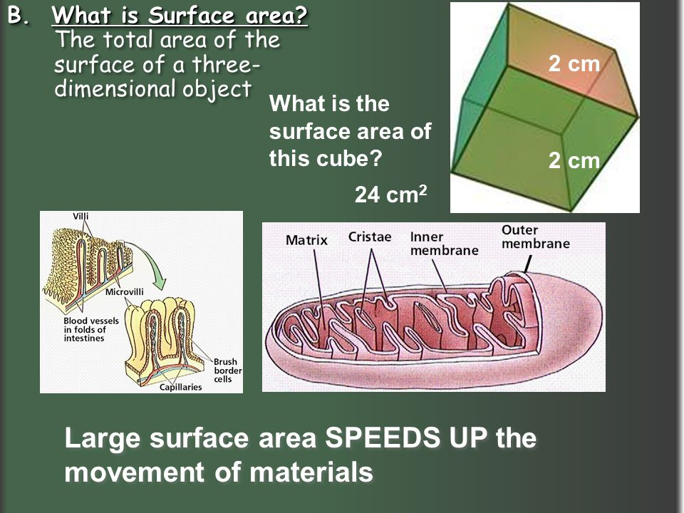 Large surface area SPEEDS UP the movement of materials