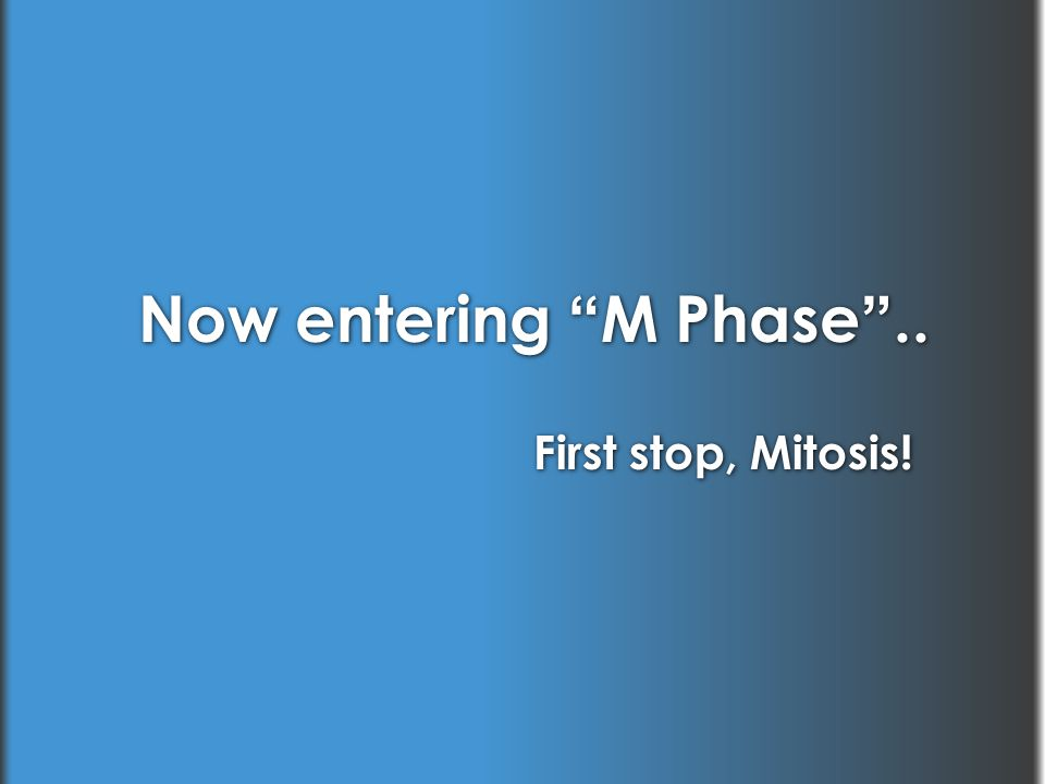 Now entering M Phase .. First stop, Mitosis!