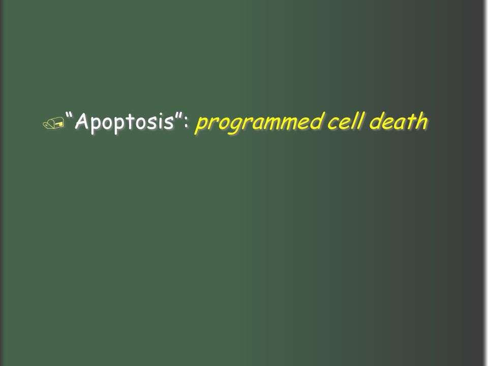 Apoptosis : programmed cell death