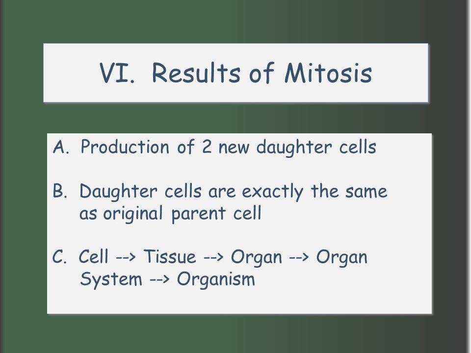 VI. Results of Mitosis A. Production of 2 new daughter cells
