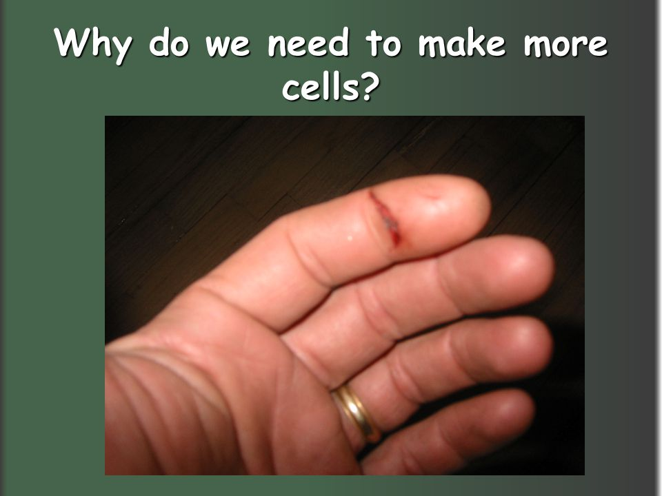 Why do we need to make more cells