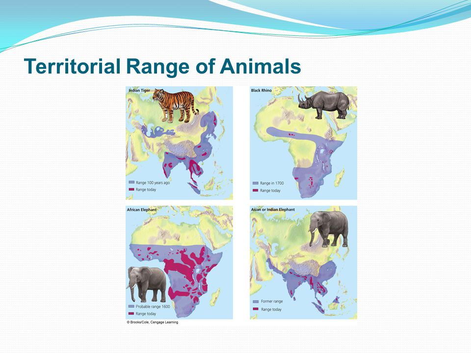 Territorial Range of Animals