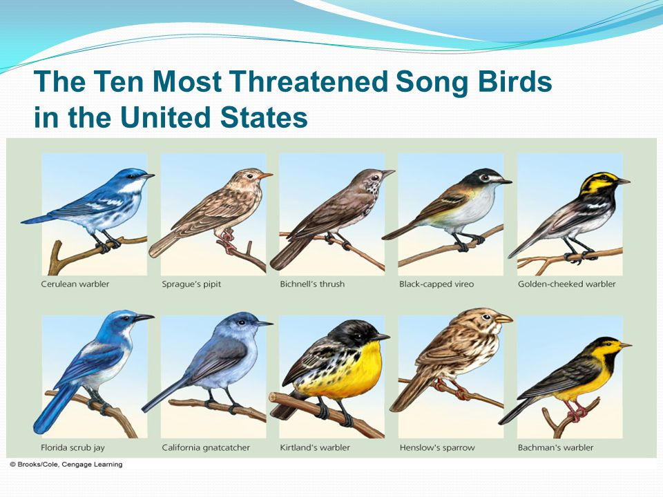 The Ten Most Threatened Song Birds in the United States