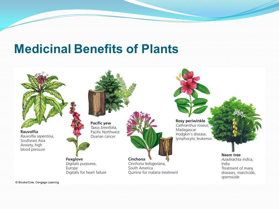 Medicinal Benefits of Plants