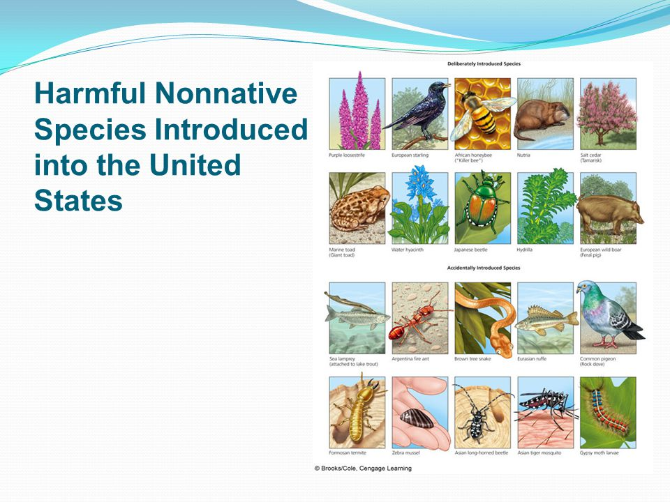 Harmful Nonnative Species Introduced into the United States