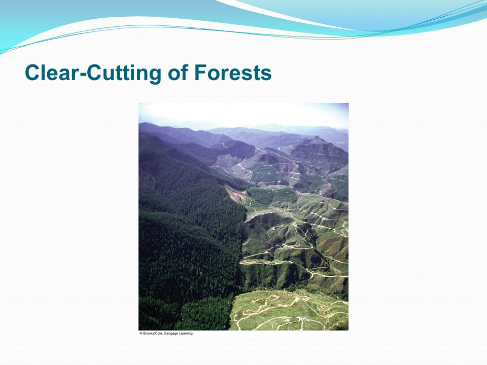 Clear-Cutting of Forests