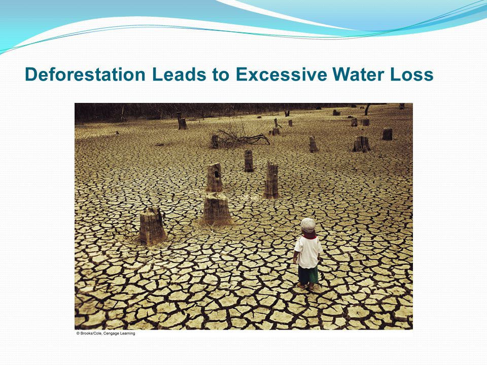 Deforestation Leads to Excessive Water Loss