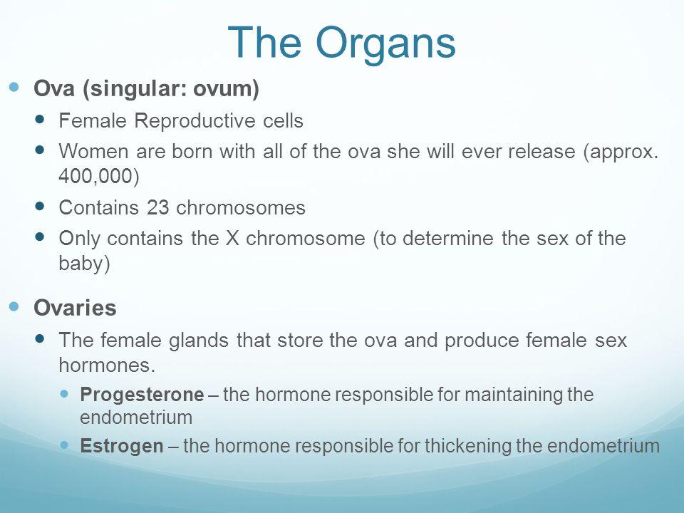 The Organs Ova (singular: ovum) Ovaries Female Reproductive cells