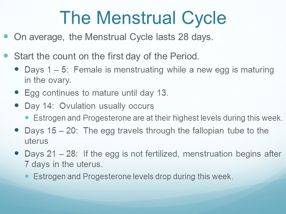 The Menstrual Cycle On average, the Menstrual Cycle lasts 28 days.