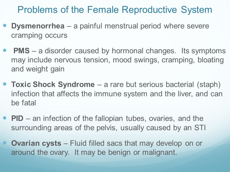 the female reproductive system - ppt video online download, Muscles