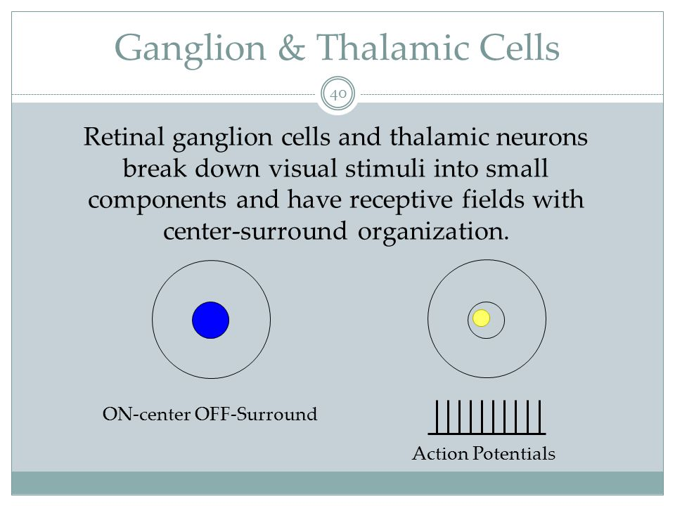 Ganglion & Thalamic Cells