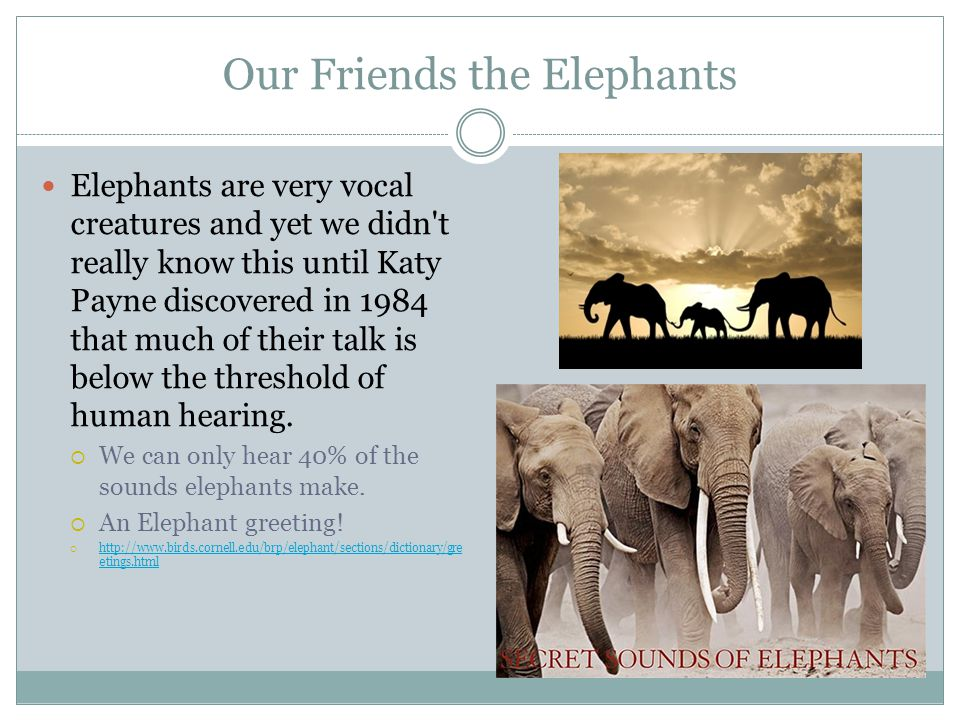 Our Friends the Elephants