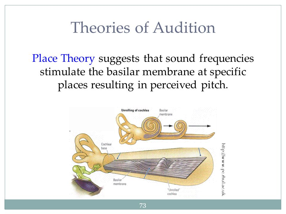 Theories of Audition Place Theory suggests that sound frequencies stimulate the basilar membrane at specific places resulting in perceived pitch.