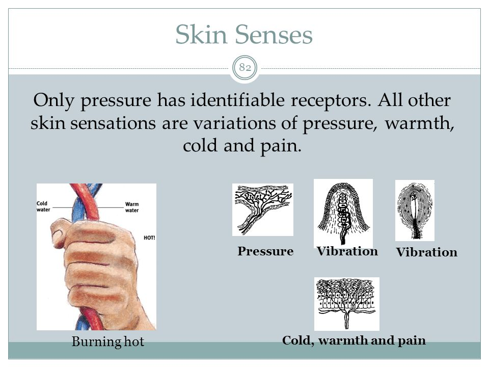 Skin Senses Only pressure has identifiable receptors. All other skin sensations are variations of pressure, warmth, cold and pain.