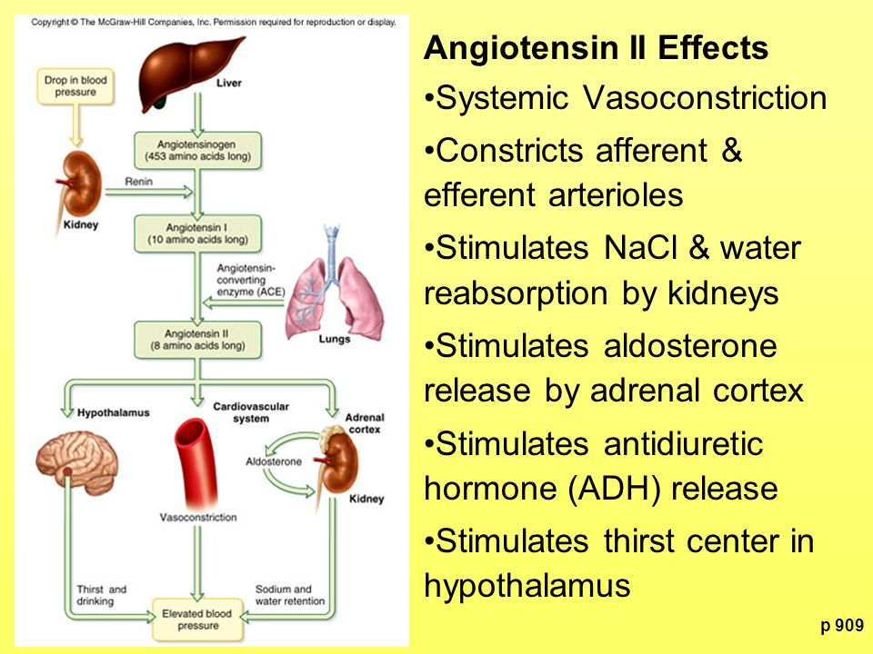 Angiotensin II Effects Systemic Vasoconstriction