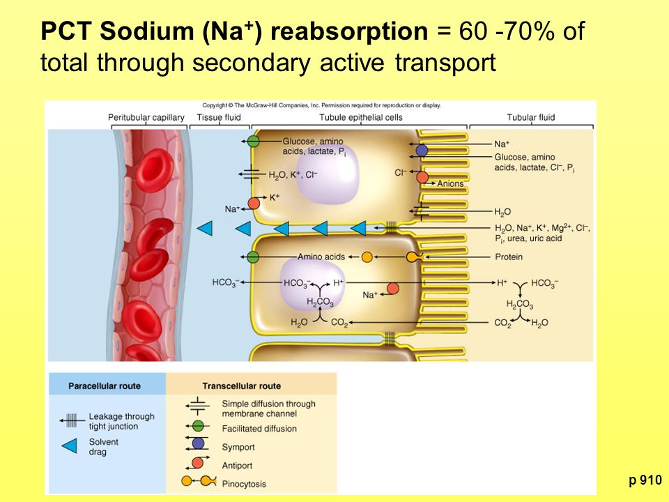 PCT Sodium (Na+) reabsorption = 60 -70% of total through secondary active transport