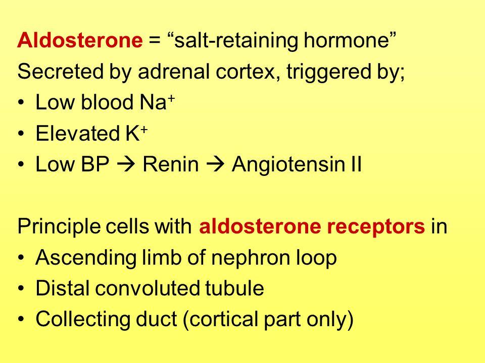 Aldosterone = salt-retaining hormone