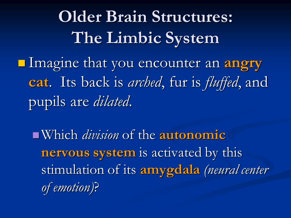 Older Brain Structures: The Limbic System