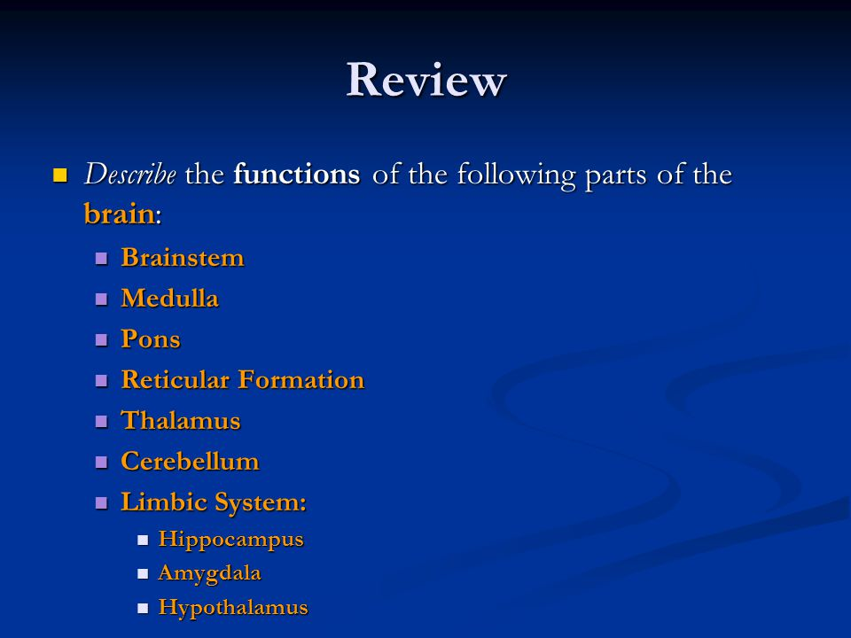 Review Describe the functions of the following parts of the brain: