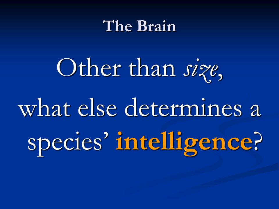 Other than size, what else determines a species' intelligence