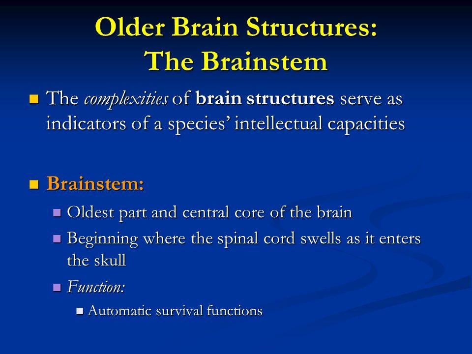 Older Brain Structures: The Brainstem
