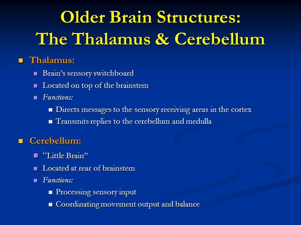 Older Brain Structures: The Thalamus & Cerebellum