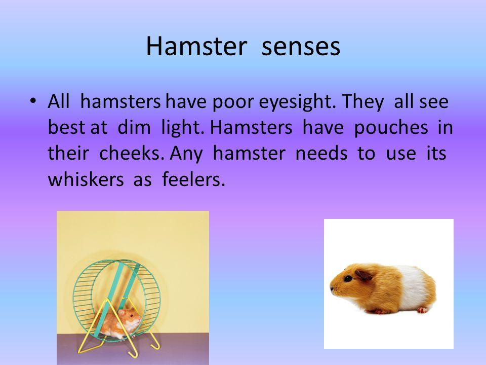 Hamster senses
