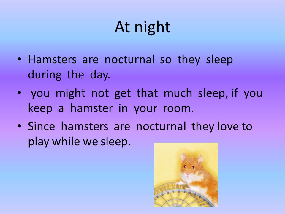 At night Hamsters are nocturnal so they sleep during the day.