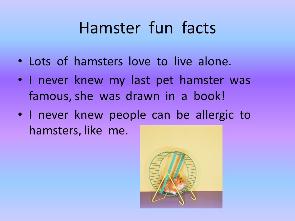 Hamster fun facts Lots of hamsters love to live alone.