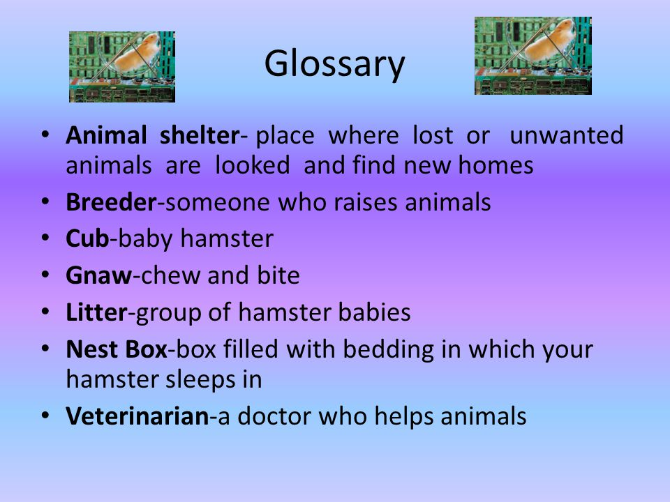 Glossary Animal shelter- place where lost or unwanted animals are looked and find new homes.