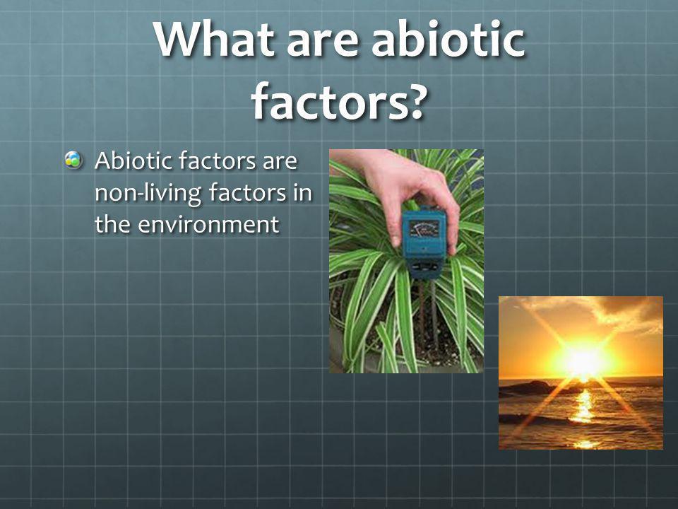 What are abiotic factors