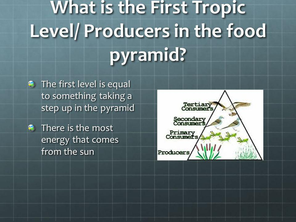 What is the First Tropic Level/ Producers in the food pyramid