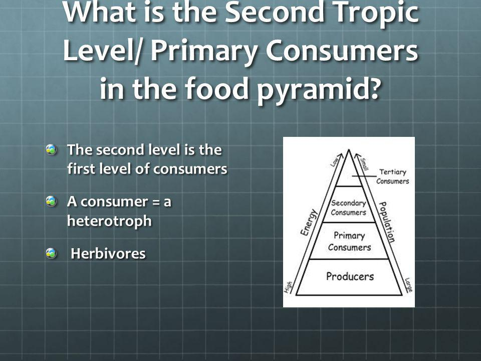 What is the Second Tropic Level/ Primary Consumers in the food pyramid