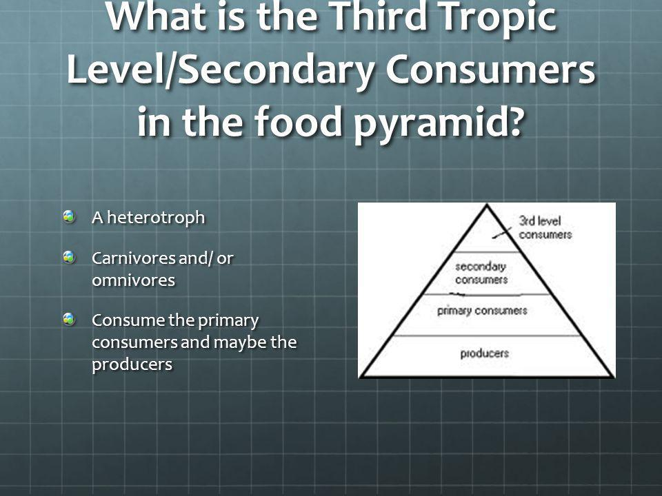 What is the Third Tropic Level/Secondary Consumers in the food pyramid