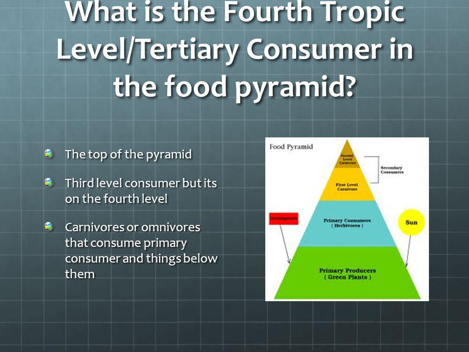 What is the Fourth Tropic Level/Tertiary Consumer in the food pyramid