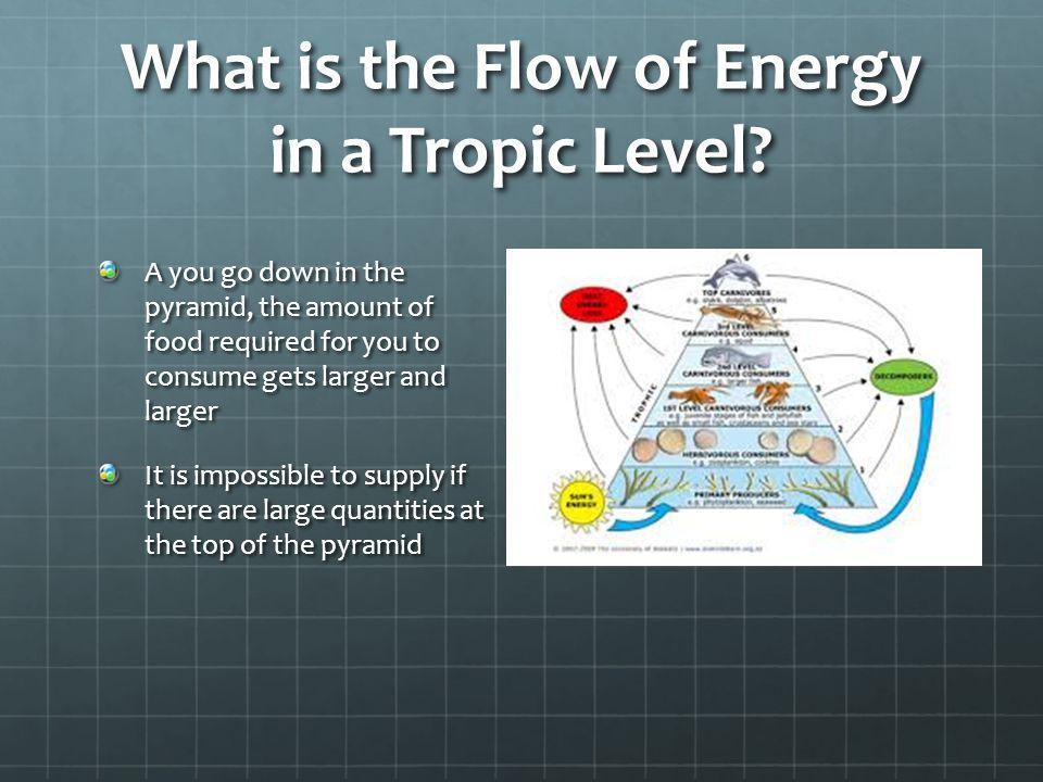 What is the Flow of Energy in a Tropic Level