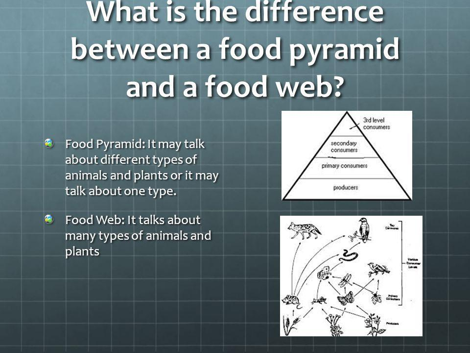 What is the difference between a food pyramid and a food web