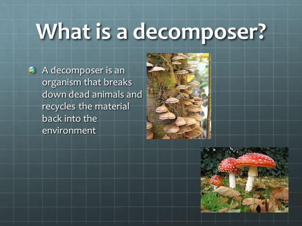 What is a decomposer.