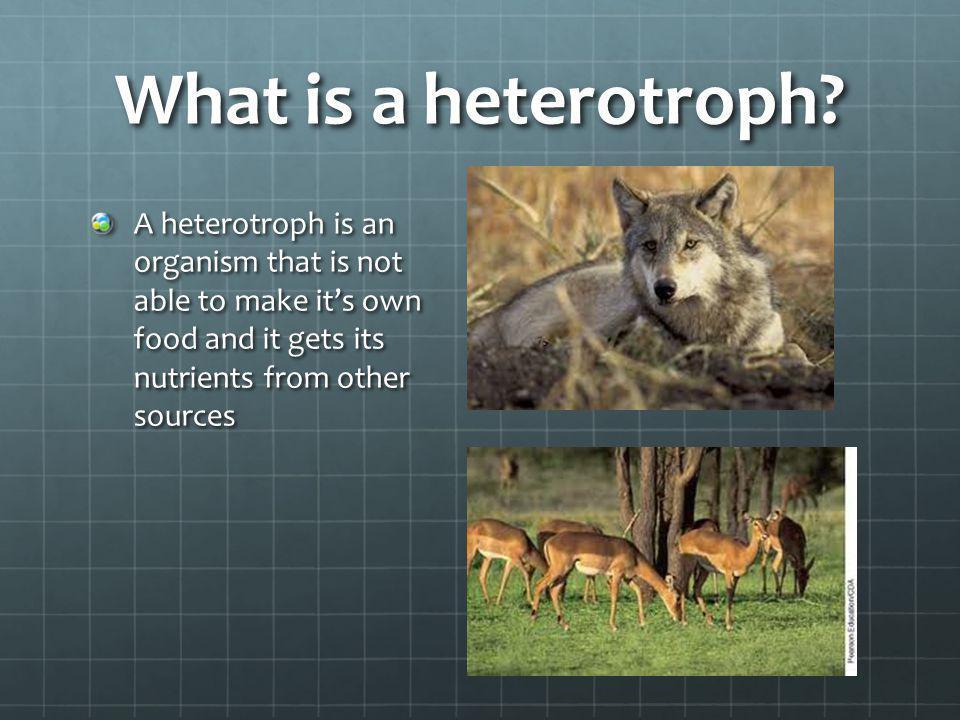 What is a heterotroph.