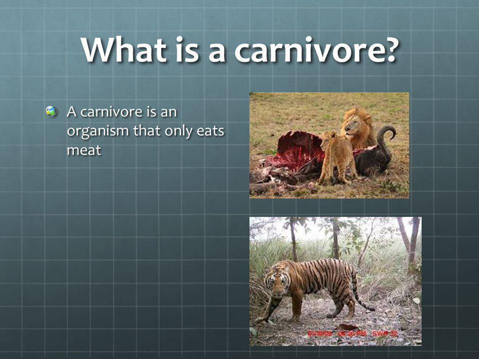 What is a carnivore A carnivore is an organism that only eats meat