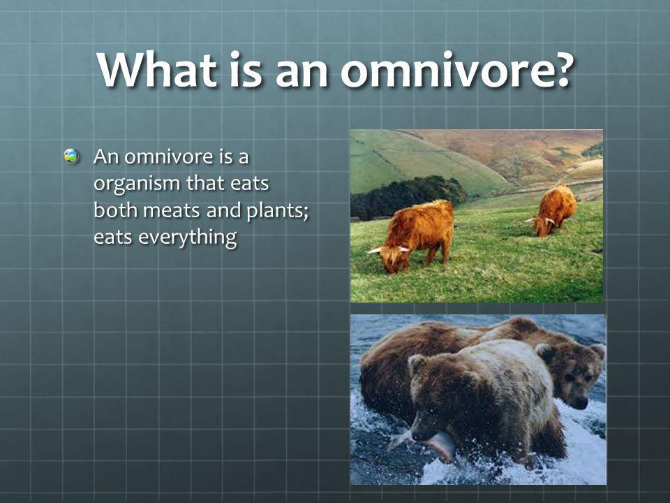 What is an omnivore An omnivore is a organism that eats both meats and plants; eats everything
